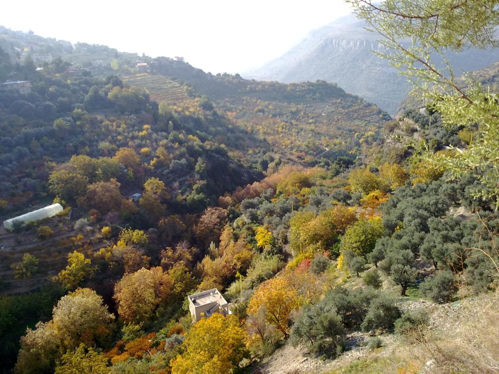 Liban toamna